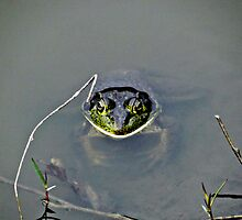Don't Croak On Me Now by Al Bourassa