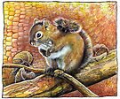 Squirrel by jankolas