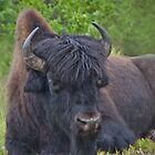 Bison Head by Yukondick