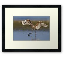 Dancing for Food Framed Print
