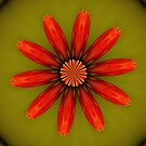 Nasturtium Flower Kaleidoscope by aprilann
