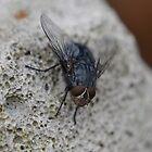 Fly by InaLina
