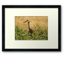 Sandhill Crane Skirted in Green Leaf Framed Print