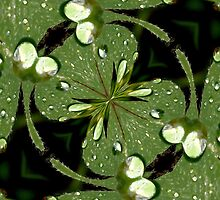 Oxalis Leaf Abstract by aprilann