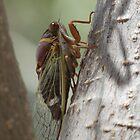 Cicada (Cactus Dogders) by Kimberly Chadwick
