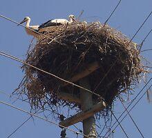 White Stork - Yesilova Koyu by taiche