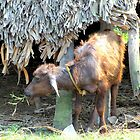 BABY WATER BUFFALO OR IN INDIA IT IS KNOWN AS A GEDDI by HEARTSFORINDIA