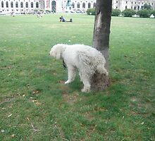 Dog peeing on Tree by SirDoyle