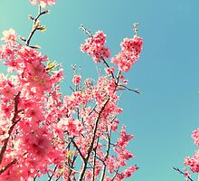 Cherry Blossoms by Samantha Robinson