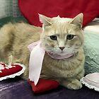 Valentine Cat  by sally-w