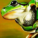 The American green tree frog (Hyla cinerea) by Terry Bailey