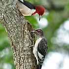 Redheaded Woodpecker Parent & Chick by Kathy Baccari