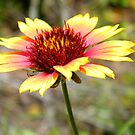 Texas Flower by BShirey