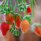Strawberries by vbk70