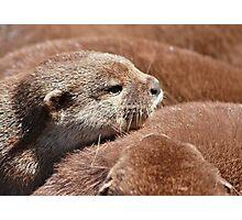 The Otter Huddle .... Photographic Print