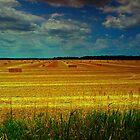 Welcome to sunny Lanark County! by Chris Kiez