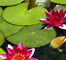 Water Lilies by 2HivelysArt