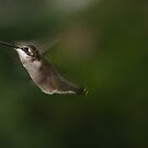 Humming Bird - Sharp eyes! by vasu
