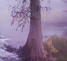 Cypress in Fog by Doyle Odom