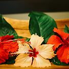 Hibiscus by Heath Carney