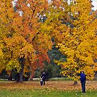 In The Leaves - Bright, Victoria, Australia by kenhay