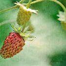las fresas del bebé by Astrid Ewing Photography