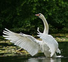Swan Dance by Moonlake