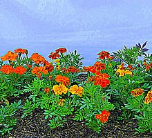 Marigolds by Fara