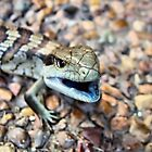 Baby Blue Tongue - All Gone Number 3 by julieapearce