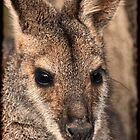 Skippy by Steve Randall