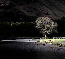 The Buttermere Tree by Jeanie