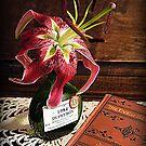 Black Beauty Lily by kkmarais