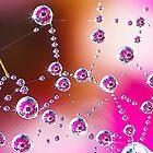 dewdrop daisy by AntonAlberts