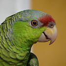 Hi I&#x27;m A Parrot And I&#x27;m Pretty And Proud - Hola Soy Un Loro Y Soy Guapo Y Orgulloso by Bernhard Matejka