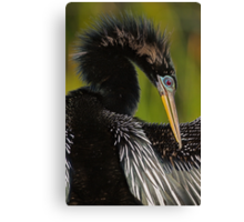 Avian Elegance Canvas Print