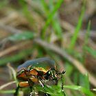 Beetle in the Grass #2 by Paula Tohline  Calhoun