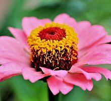 Pretty Pink Petals by aprilann