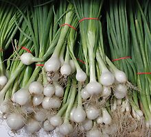 Bunches of Onions by Tom  Reynen