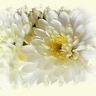 Delicate flower by Art-Motiva