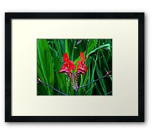 Reds and Greens Framed Print