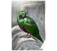 Emerald Starling Poster