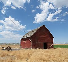 The Barn....OR....How I Met The Charging Bull by trueblvr