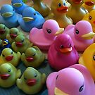 Great Day for Ducks by DEB CAMERON