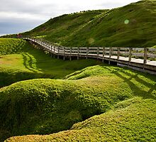 Rolling hills by Janette Anderson