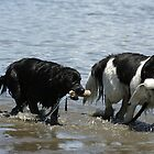 Newfies's at Work by Lynn  Gibbons