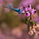 Blue and Pink  by César Torres
