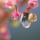 Pink Sparkle by KUJO-Photo