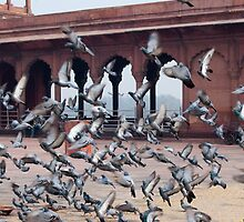 Flight of pigeons inside the Jama Masjid in Delhi by ashishagarwal74