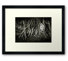 Buddha in the tree Framed Print