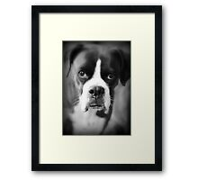 Arwen's Portrait - Female Boxer Framed Print